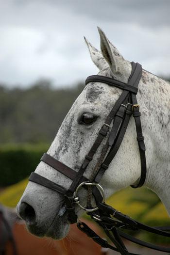 Horse-b