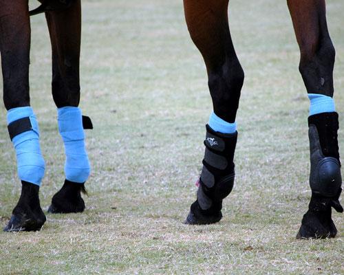 Legs-a
