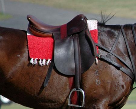 Saddle-a