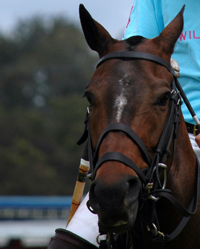 Horse-a