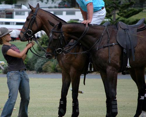 Change-horses-a
