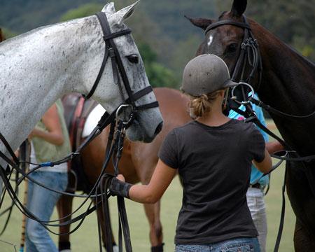 Horse-c