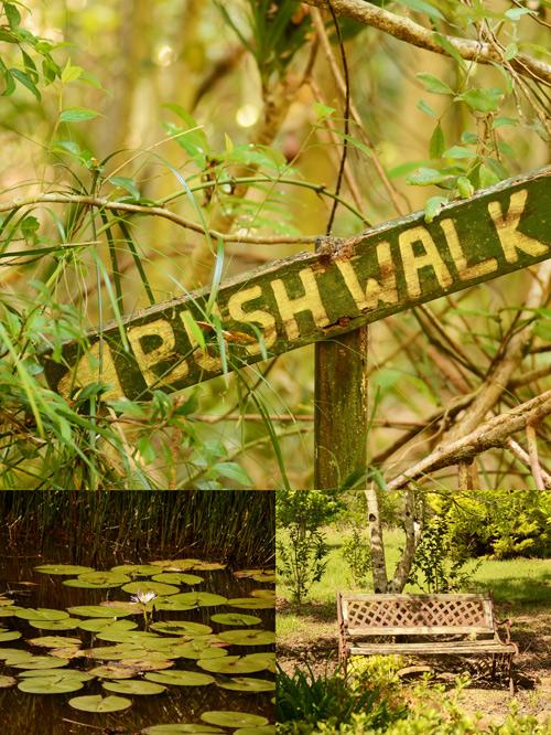 Bush-walk