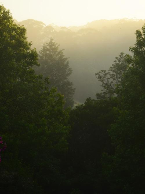 Mist-trees